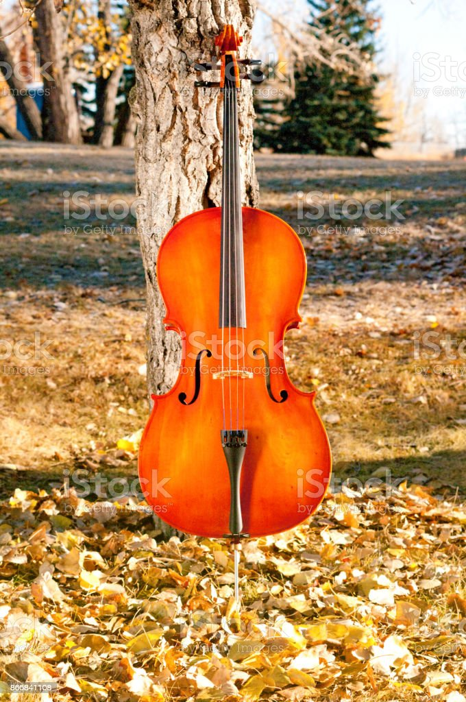 Cello outdoors in the park in fall autumn day with colourful leaves stock photo