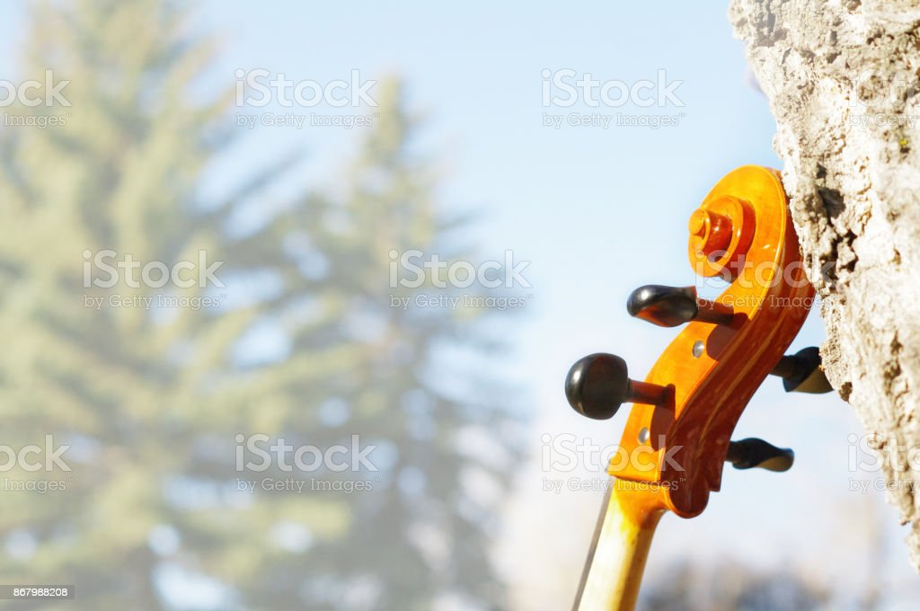 Cello scroll outdoors in the park on fall autumn day with colourful leaves with faded white space stock photo