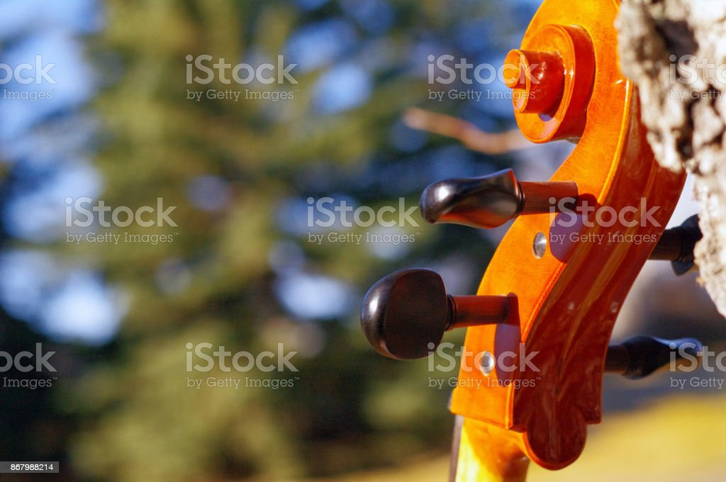 Cello scroll outdoors in the park on fall autumn day with colourful leaves stock photo
