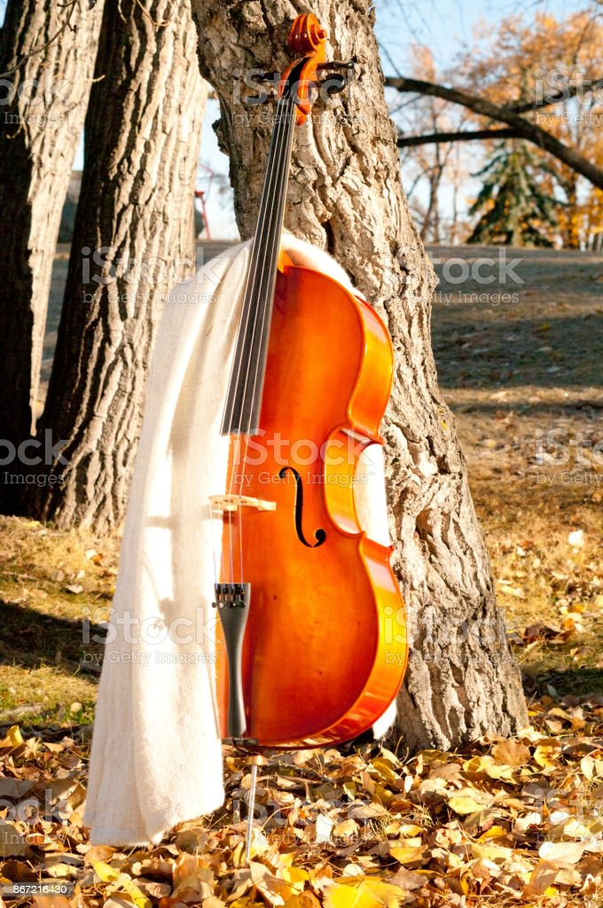 Cello with blanket outdoors in the park in fall autumn day with colourful leaves stock photo
