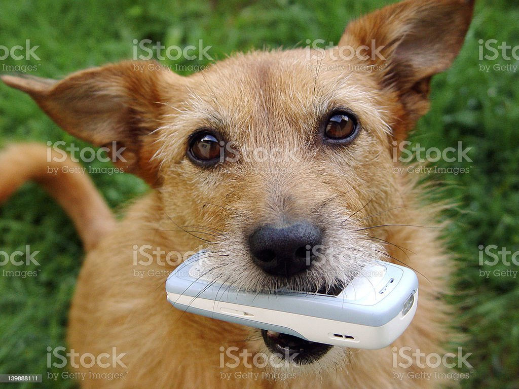 Cellphone for you! stock photo
