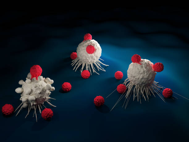 T cells attacking cancer cells stock photo