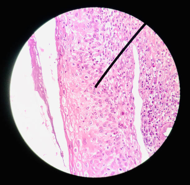 cells in reproductive female cytology and histology concept medical scinece. - cytology stock pictures, royalty-free photos & images