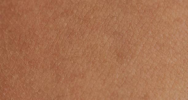 cellen op de menselijke huid - menselijke huid stockfoto's en -beelden