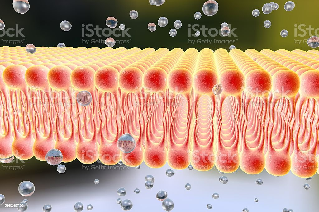 Cellular membrane with diffusion of molecules stock photo