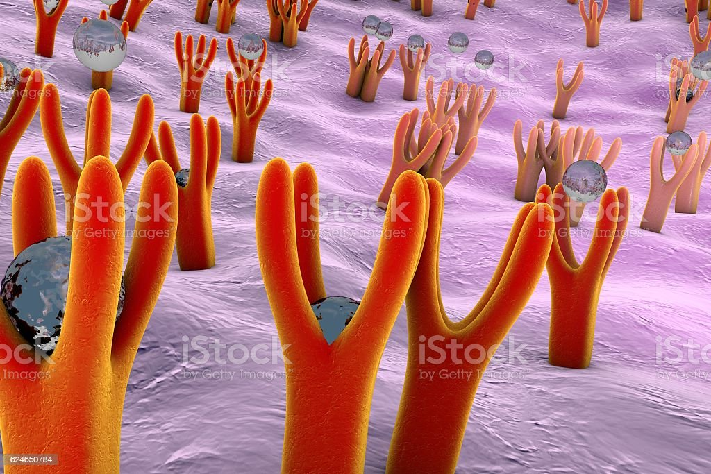 Cellular membrane with receptors stock photo