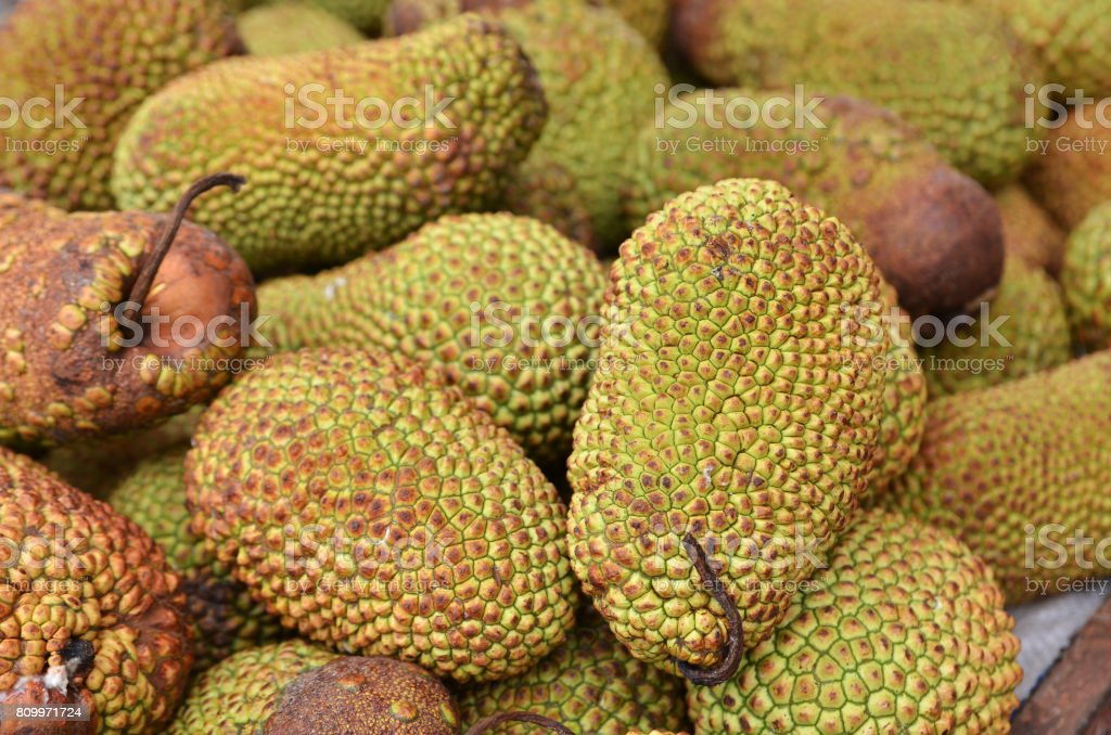 Cempedak or Artocarpus Integer stock photo