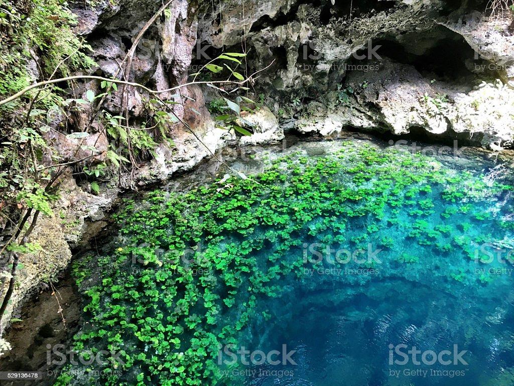 Cenote beauty stock photo