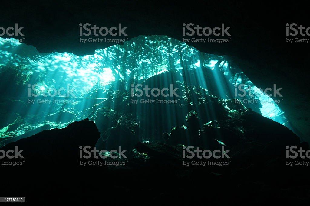 Cenote Diving bildbanksfoto