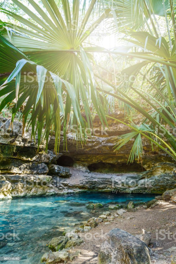 Cenote-투명 한 청록색 물 바위와 열 대 식물으로 둘러싸인 자연 석호 와일드는 정글 - 로열티 프리 강 스톡 사진