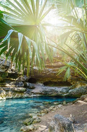 Cenote투명 한 청록색 물 바위와 열 대 식물으로 둘러싸인 자연 석호 와일드는 정글 강에 대한 스톡 사진 및 기타 이미지