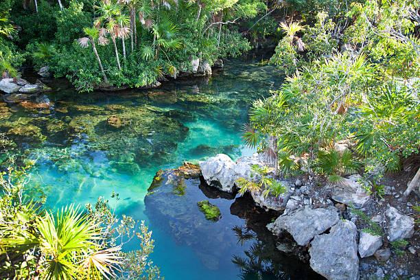 cenote de água azul-turquesa em xel-ha, cancun - laguna - fotografias e filmes do acervo