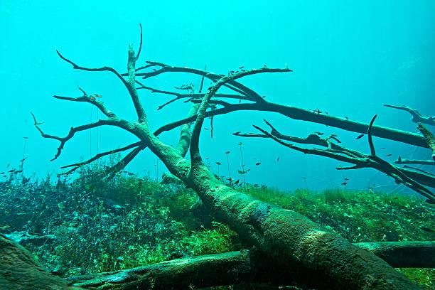 Cenote underwater stock photo