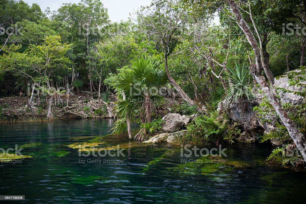 Cenote with pure water, Mexico stock photo