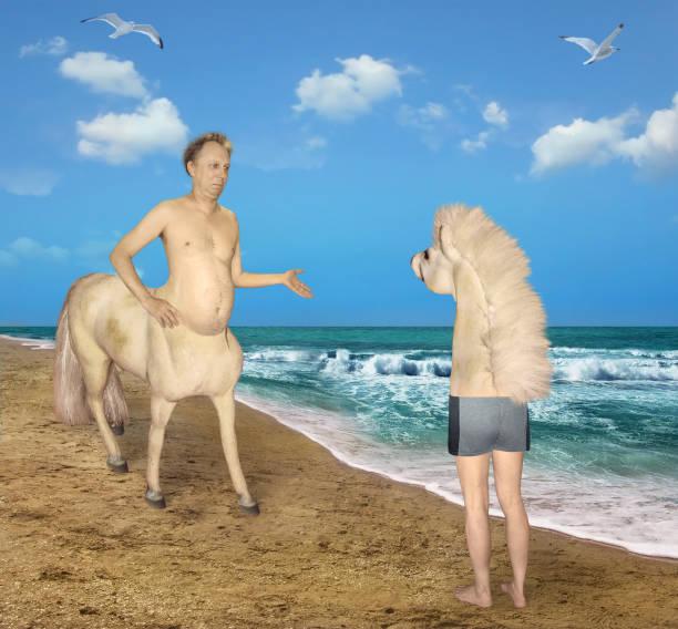 centaur trifft auf ein seltsames pferd - cut wrong hair stock-fotos und bilder