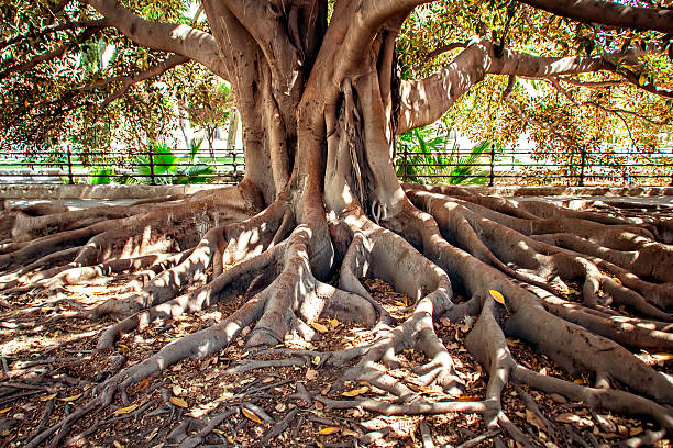 centenarian tree - creation stock photos and pictures