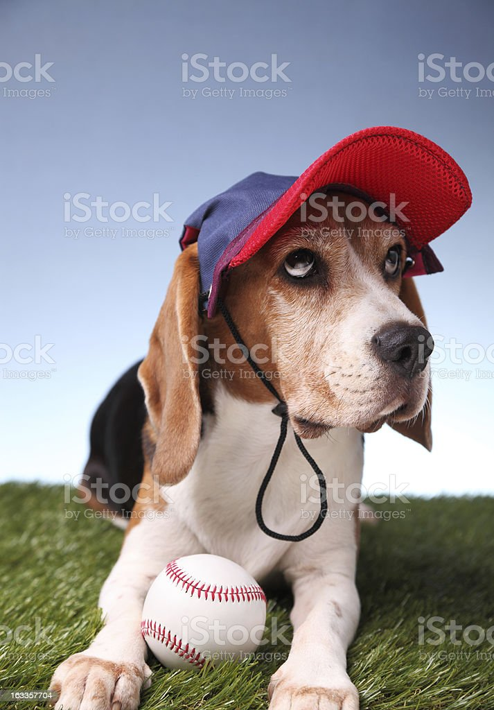 Center Fielder royalty-free stock photo