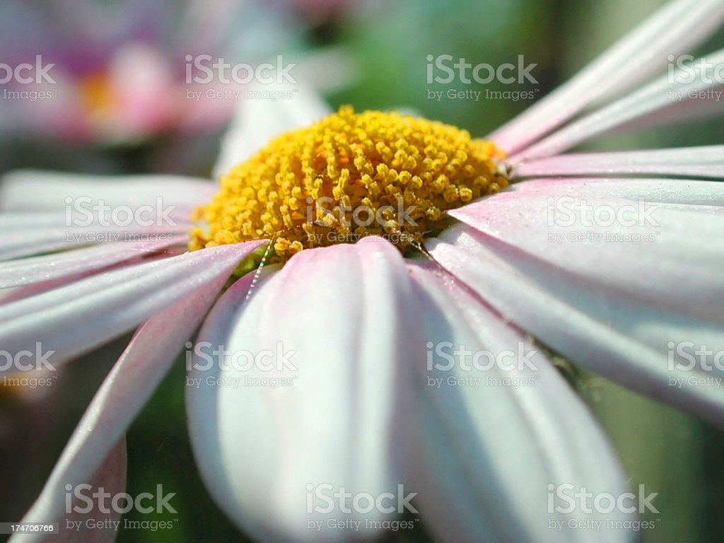 Center of a flower stock photo