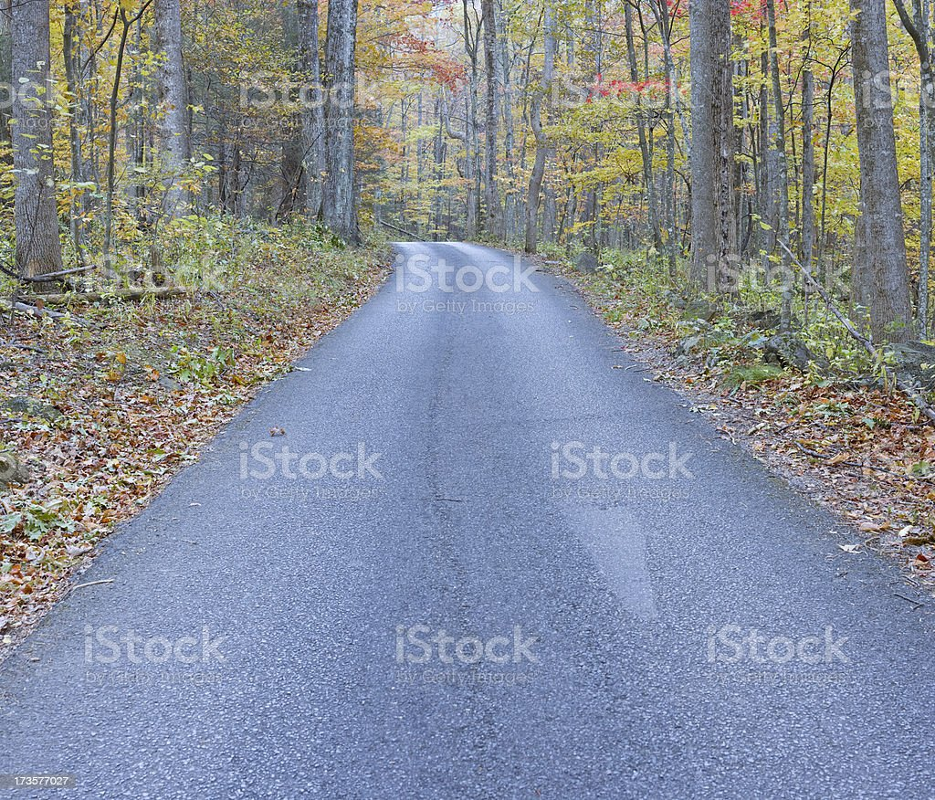 Center of the Road (XXL) royalty-free stock photo