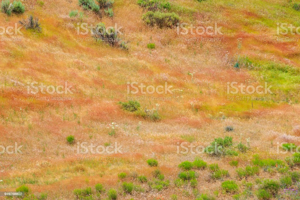 Central Oregon stock photo