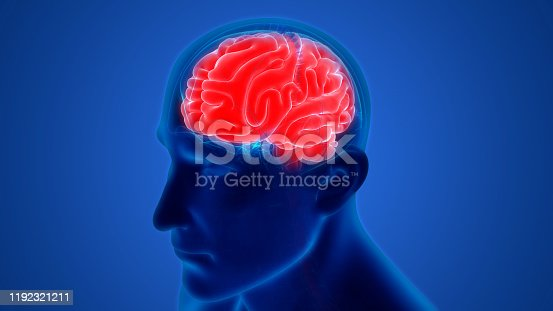 692684668istockphoto Central Organ of Human Nervous System Brain Anatomy 1192321211