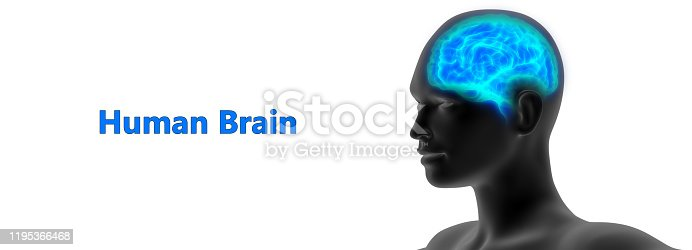 692684668istockphoto Central Organ of Human nervous System Brain Anatomy 1195366468