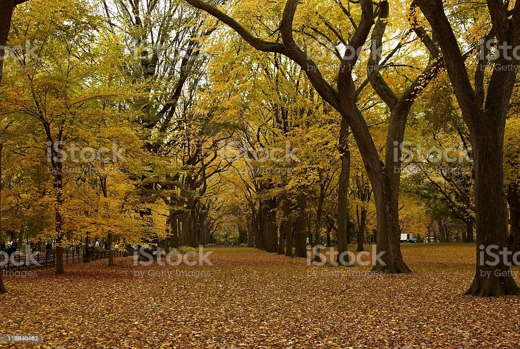 Central Park Alley in the Fall royalty-free stock photo