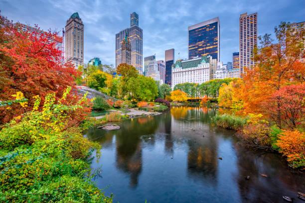 central park outono - nova york - fotografias e filmes do acervo