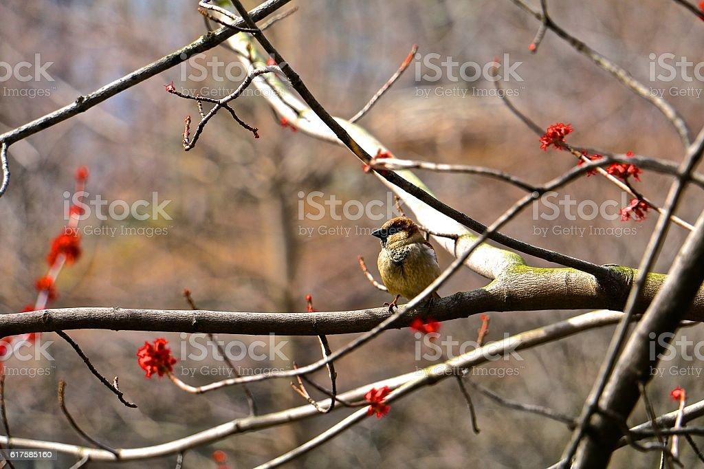 Central Park Bird stock photo