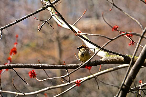 central park bird - aleks66 stock pictures, royalty-free photos & images