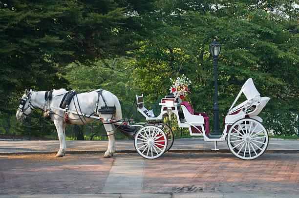 central park mit dem offroad-buggy - pferdekutsche stock-fotos und bilder