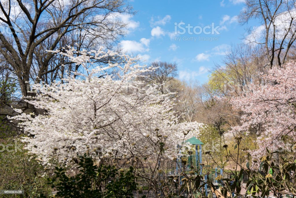 Central Park during springtime. royalty-free stock photo