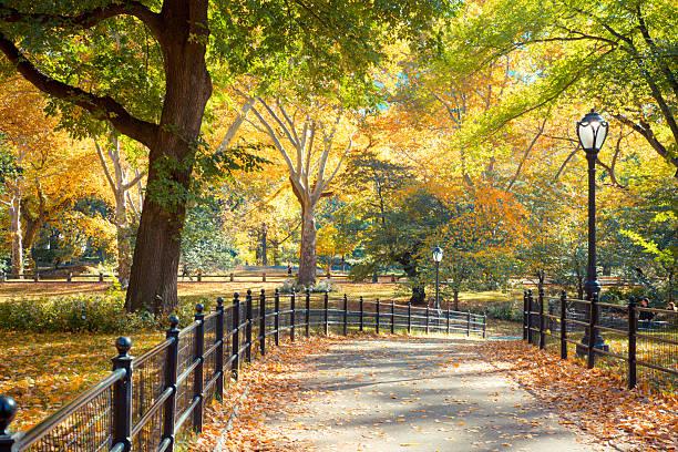 central park fall - central park manhattan zdjęcia i obrazy z banku zdjęć