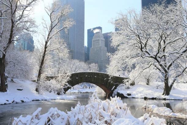 central park in heavy snow - central park manhattan zdjęcia i obrazy z banku zdjęć
