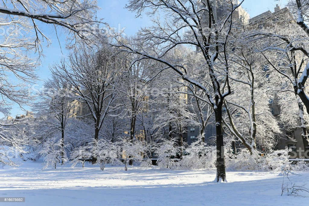 Central Park in heavy snow stock photo