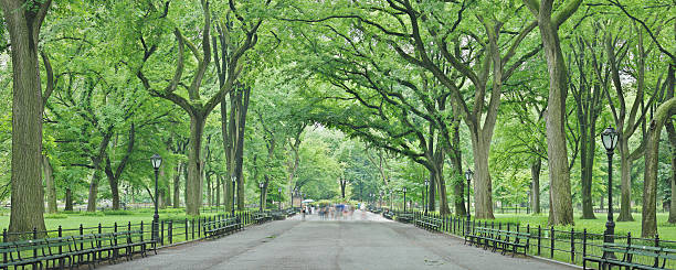 Central Park Mall - Summer - New York stock photo