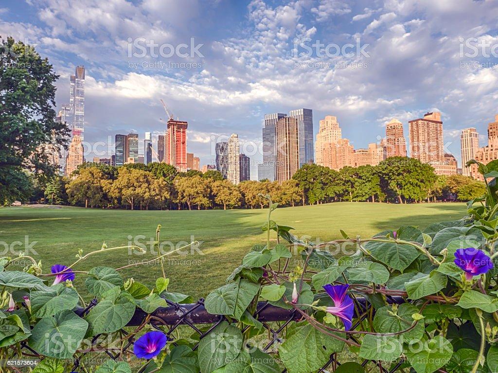 Central Park, New York City great lawn photo libre de droits