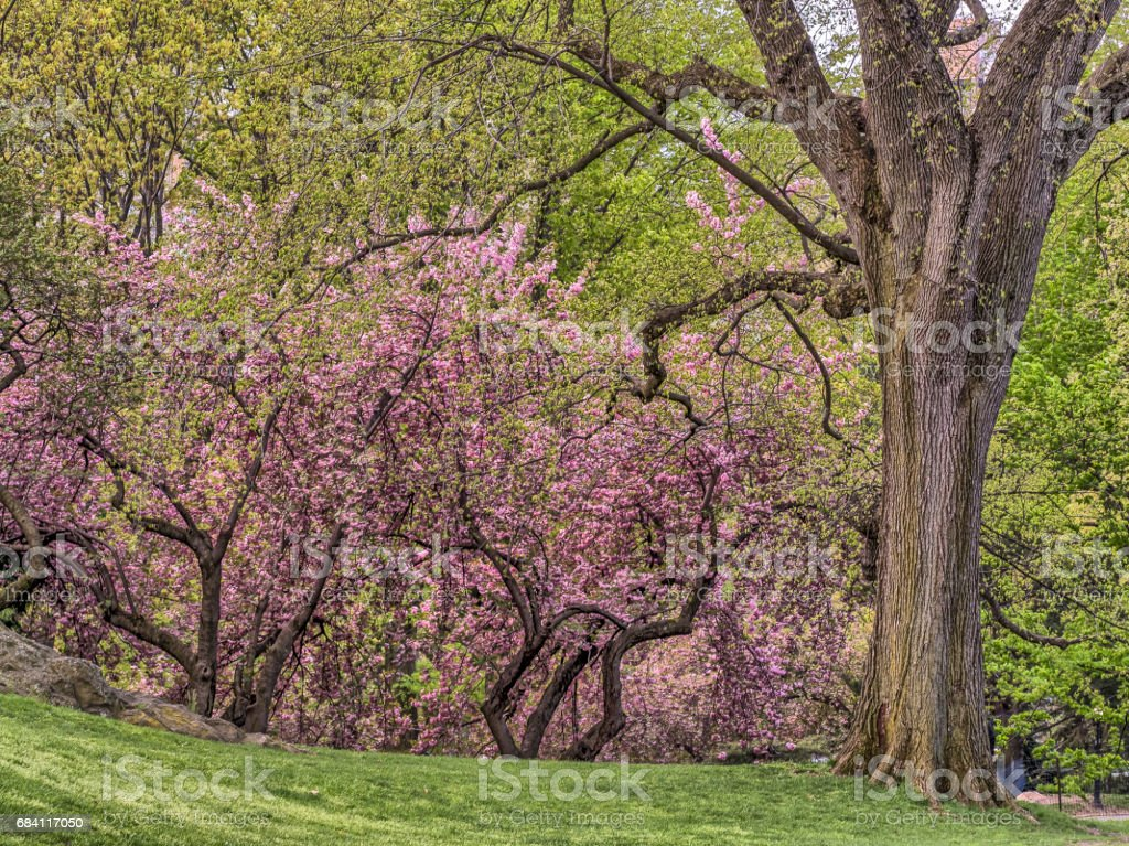 Central Park, New York City spring foto stock royalty-free