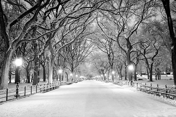 セントラル・パーク、ニューヨークの銀世界で夜明け - 都市 モノクロ ストックフォトと画像