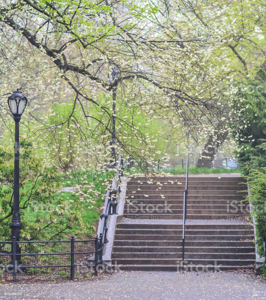 Central park stairs photo libre de droits