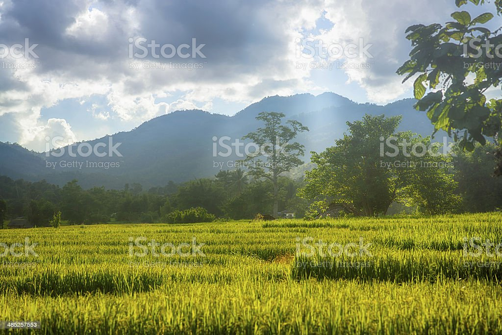 Central Valley stock photo
