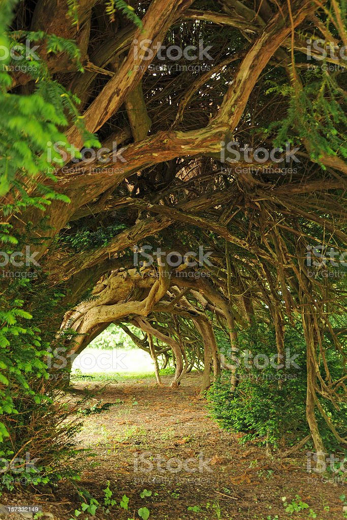 centuries old yew tunnel, blinding light at the end of stock photo