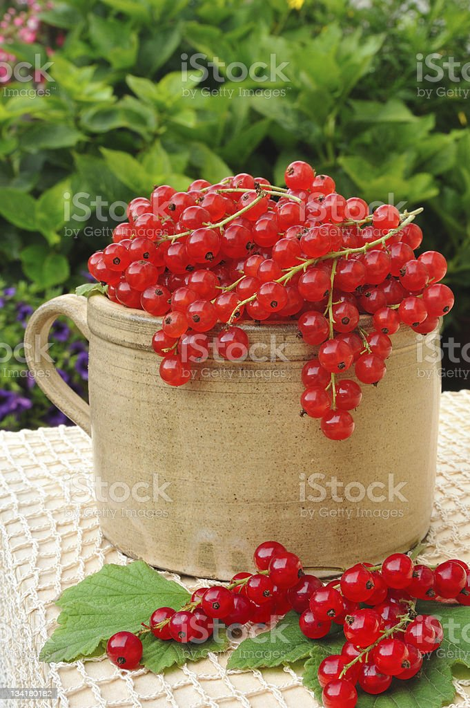 Ceramic cup full of fresh red currant berries royalty-free stock photo