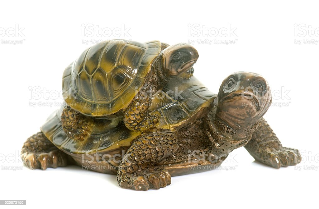 ceramics turtle in studio stock photo