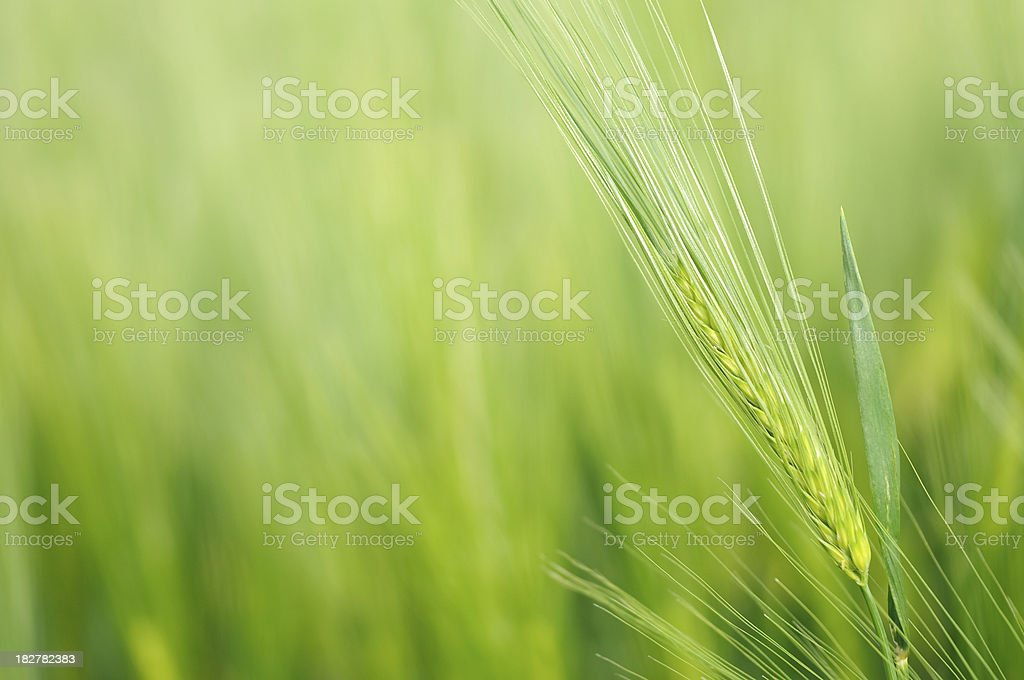 Cereal Close up royalty-free stock photo