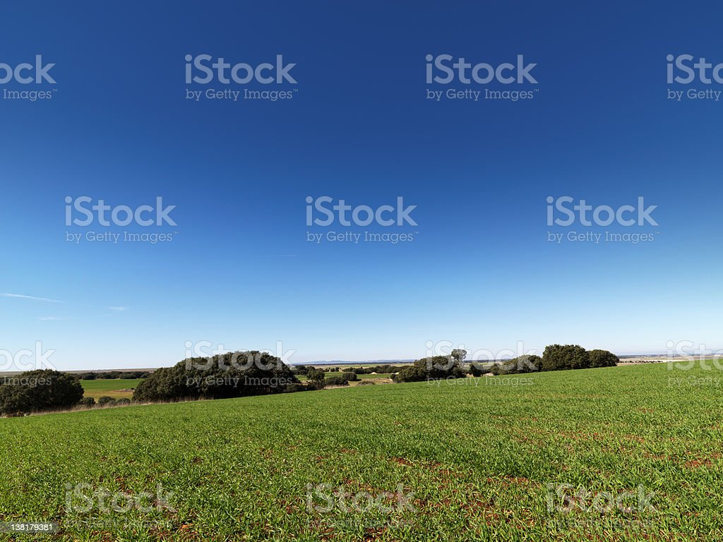 Cereal field and sky 39 megapixels royalty-free stock photo