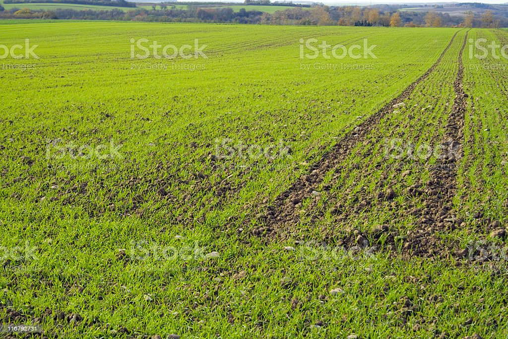cereal field royalty-free stock photo