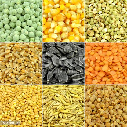 Cereals colored collection - basic grains and seed