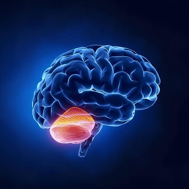 Kleinhirn Teil-menschliche Gehirn auf x-ray Blick – Foto