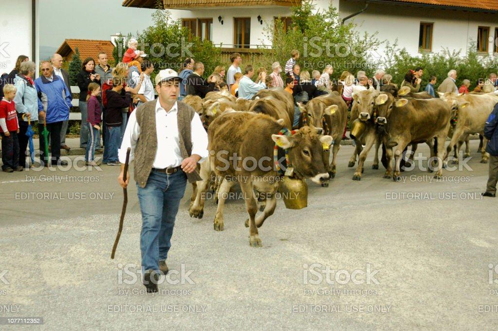 Zeremoniell, die Fahrt von Rindern von der Berg – Foto